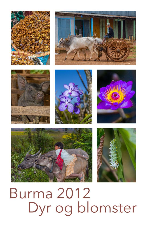Burma-dyr-og-blomster