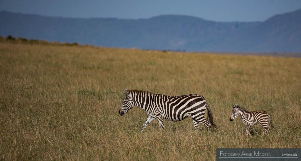 AMFOTO 2013 Kenya-195