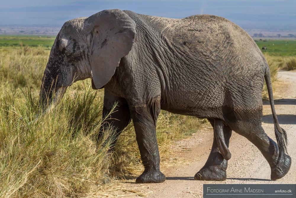 Elefant med et femte ben :-)