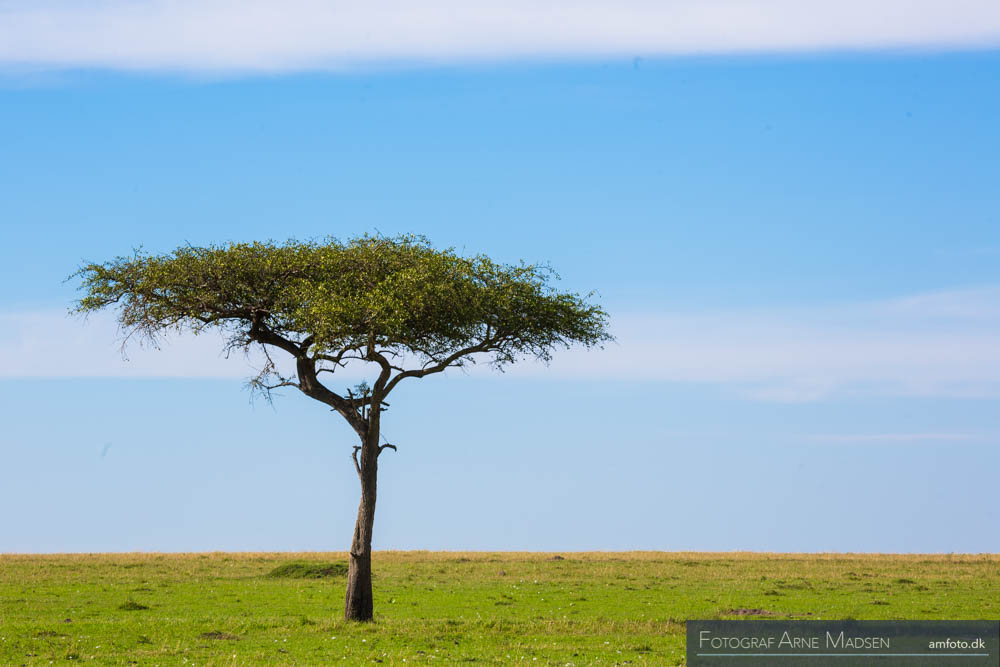 AMFOTO 2013 Kenya-200