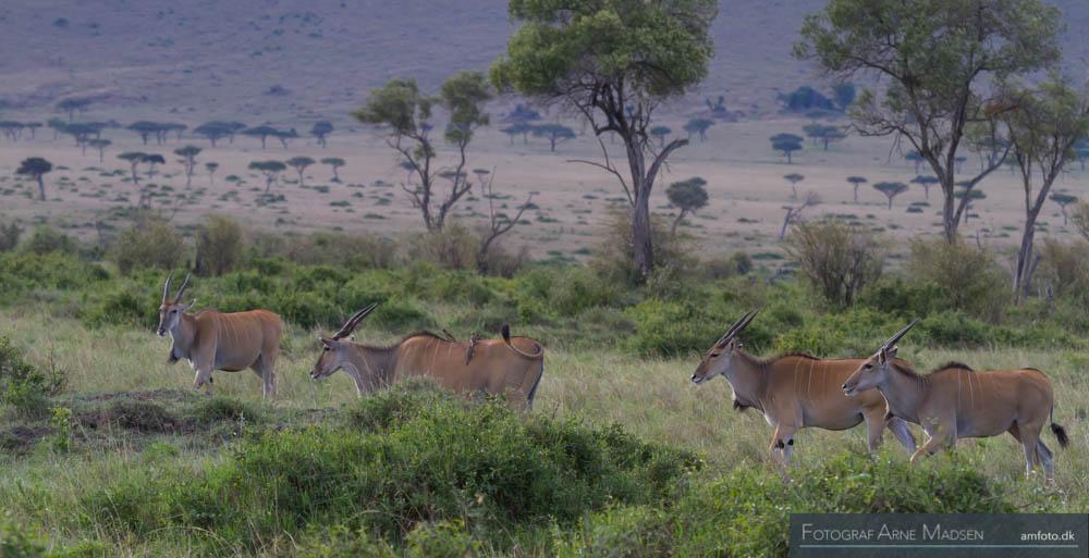 AMFOTO 2013 Kenya-223