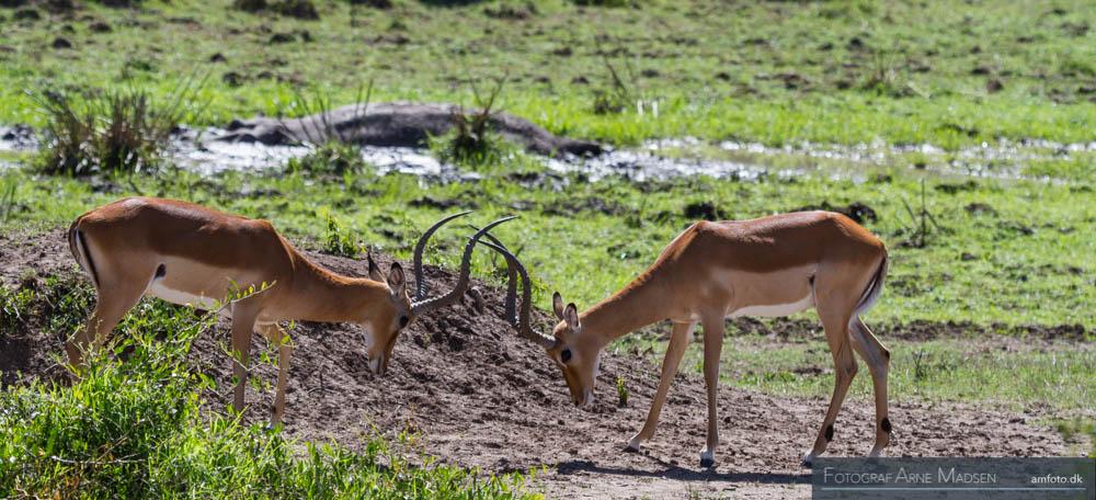 AMFOTO 2013 Kenya-247