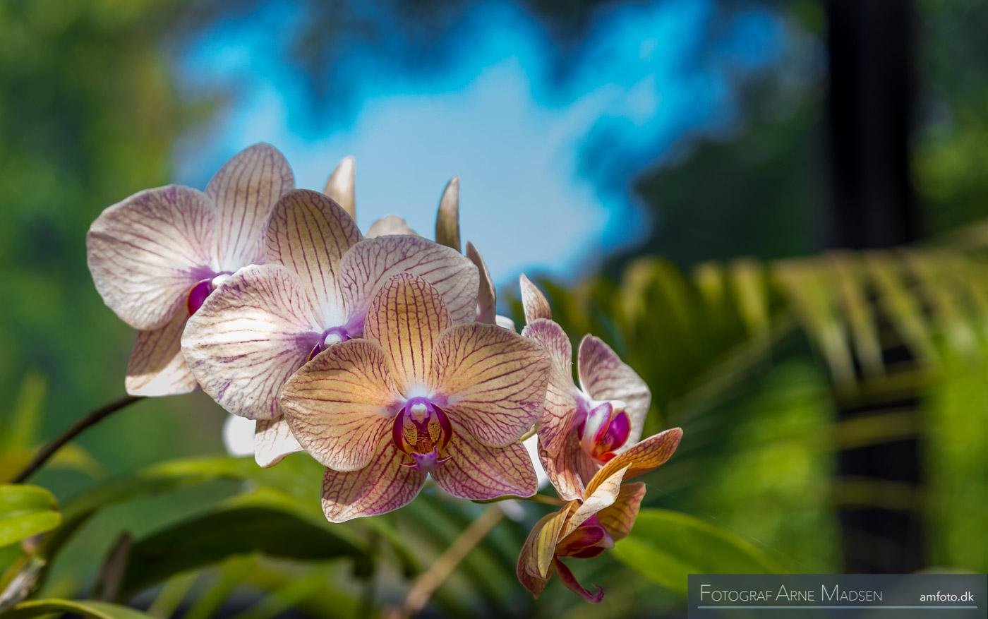 2016 Sri Lanka_Dag 4 Kandy botanical Garden_403
