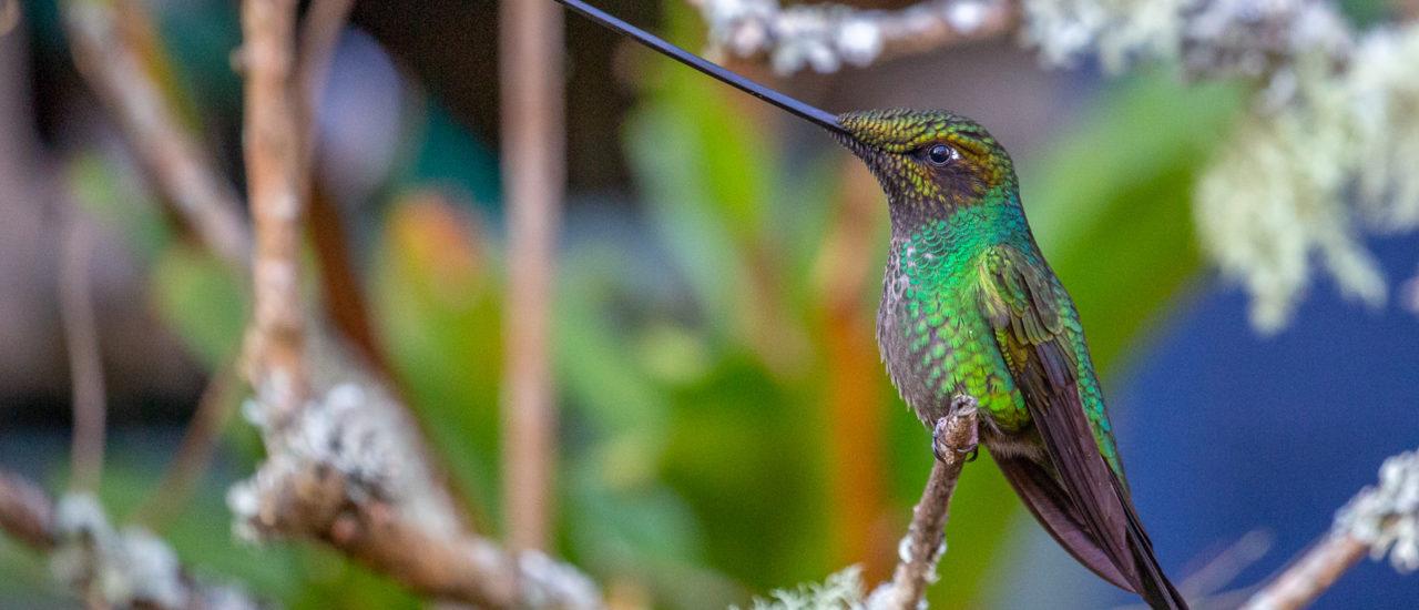 Colombia et af naturens mirakellande